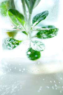 ボトルの水に浮かぶハーブの写真素材 [FYI01708394]