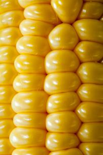 トウモロコシの実のアップの写真素材 [FYI01708404]