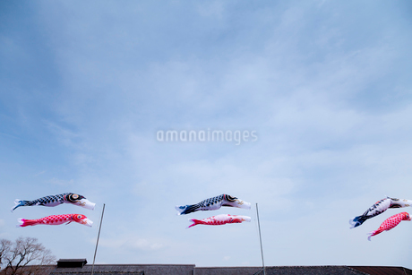青空と風に靡く鯉のぼりの写真素材 [FYI01708637]