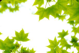 空に向かった新緑の額縁の写真素材 [FYI01708655]