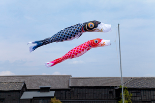 青空と風に靡く鯉のぼりの写真素材 [FYI01708662]