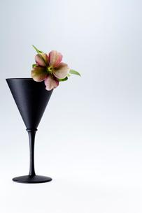 黒のワイングラスとクリスマスローズ一輪の写真素材 [FYI01708712]