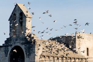ハトが群がるサン・ベネゼ橋のサン・ニコラ礼拝堂の写真素材 [FYI01708754]