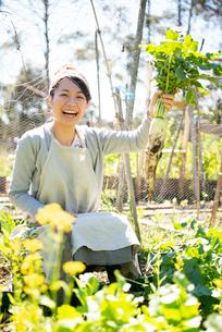 畑で収穫した大根を持って喜んでいる女性の写真素材 [FYI01708940]