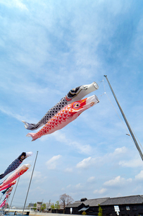 青空と風に靡く鯉のぼりの写真素材 [FYI01709117]