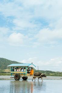西表島と由布島間を渡る水牛車の写真素材 [FYI01709401]