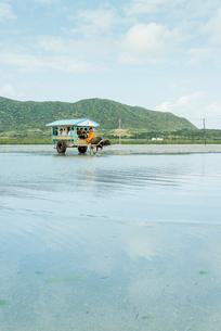 西表島と由布島間を渡る水牛車の写真素材 [FYI01709472]