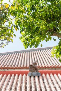 石垣島の赤瓦屋根の上のシーサーの写真素材 [FYI01709625]