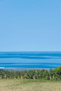 バナナの木越しに見る真っ青な空と海の写真素材 [FYI01709654]