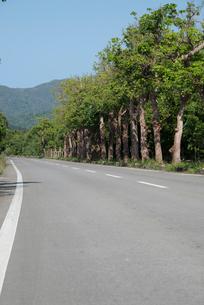 山並みを遠くに見る並木道路(ローアイポイント)の写真素材 [FYI01709710]