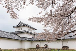 桜越しに見る彦根城西の丸三重櫓の写真素材 [FYI01709717]