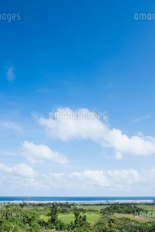 緑の畑越しに見る雲浮かぶ青空と海の写真素材 [FYI01709833]