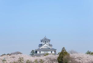 桜と長浜城(長浜城歴史博物館)の写真素材 [FYI01709863]