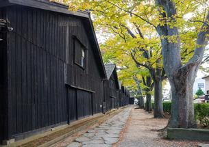 紅葉並木と列をなす山居倉庫の写真素材 [FYI01709903]