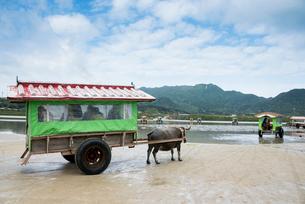 西表島と由布島間を渡る水牛車の写真素材 [FYI01709951]