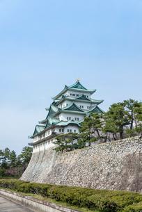 名古屋城の石垣と満開の桜の写真素材 [FYI01709978]