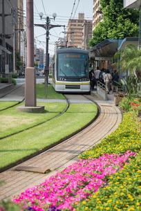 緑化された軌道敷を走る鹿児島市電の写真素材 [FYI01710079]