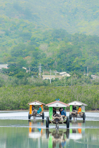 西表島と由布島間を渡る水牛車の写真素材 [FYI01710114]