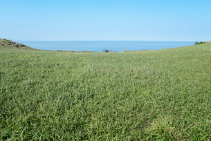 海を遠くに見る一面の牧草地の写真素材 [FYI01710187]