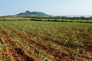 植えられたばかりのサトウキビ畑の写真素材 [FYI01710220]