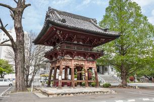 本願寺派名古屋別院鐘楼とメタセコイアの大木の写真素材 [FYI01710338]