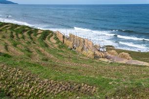 日本海を望む稲刈り後の白米千枚田の写真素材 [FYI01710461]