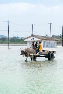 西表島と由布島間を渡る水牛車の写真素材 [FYI01710494]