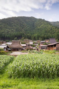 トウモロコシ畑越しに見る美山の茅葺き屋根の集落の写真素材 [FYI01710507]