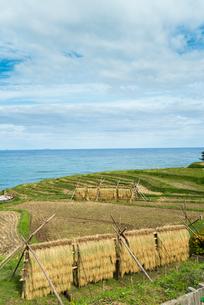 日本海を望む稲刈り後の白米千枚田の写真素材 [FYI01710514]