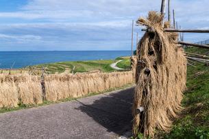 日本海を望む稲刈り後の白米千枚田の写真素材 [FYI01710702]