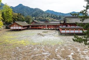 厳島神社干潮時の鏡の池を見る風景の写真素材 [FYI01710823]