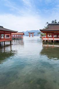 厳島神社回廊より大鳥居を見る風景の写真素材 [FYI01710845]