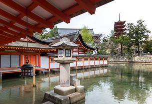 厳島神社客神社と石燈籠越しに五重塔を見るの写真素材 [FYI01710861]