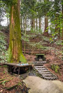 天岩戸神社東本宮の根元から神水が湧き出る神木を見る風景の写真素材 [FYI01710869]