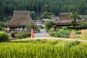 稲穂越しに見る美山の茅葺き民家の風景の写真素材 [FYI01710879]