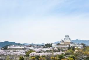 満開の桜と姫路城を見る風景の写真素材 [FYI01710880]