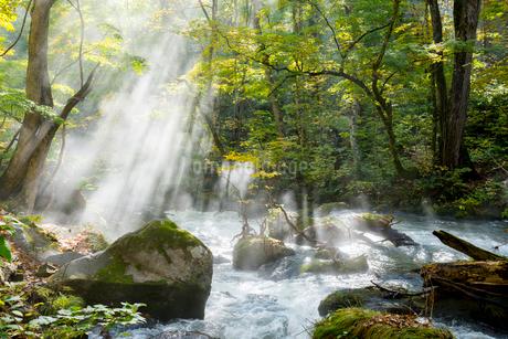 朝陽のシャワーを浴びる紅葉の奥入瀬渓流の写真素材 [FYI01710911]
