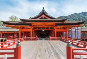 厳島神社高舞台越しに見る本社正面の写真素材 [FYI01710926]