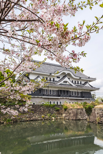 満開の桜越しに見る五島観光歴史資料館の写真素材 [FYI01710937]