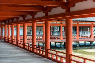 厳島神社西回廊の写真素材 [FYI01711023]
