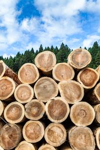 森林を背景にスギとヒノキの丸太が積み上げられた風景の写真素材 [FYI01711035]