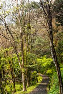 高千穂峡の散策道の写真素材 [FYI01711048]