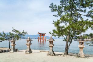 厳島神社石燈籠とマツの木越しに大鳥居を見るの写真素材 [FYI01711065]