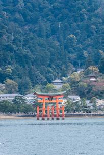 瀬戸内海から厳島神社大鳥居を見るの写真素材 [FYI01711073]