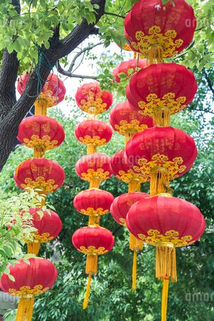 緑豊かな樹木に下がる複数の赤い提灯の写真素材 [FYI01711103]