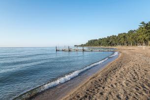 琵琶湖マキノ・サニービーチからマツ林を見るの写真素材 [FYI01711136]