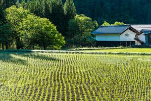 蔵を見る田植え直後の水田風景の写真素材 [FYI01711193]