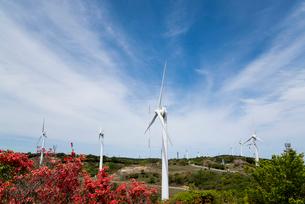 立ち並ぶ青山高原の風力発電風車をツツジ越しに見るの写真素材 [FYI01711196]