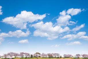 青空と雲とサクラ並木を見る風景の写真素材 [FYI01711212]