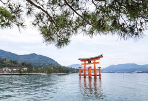 マツ越しに厳島神社大鳥居と瀬戸内の山並みを見るの写真素材 [FYI01711225]
